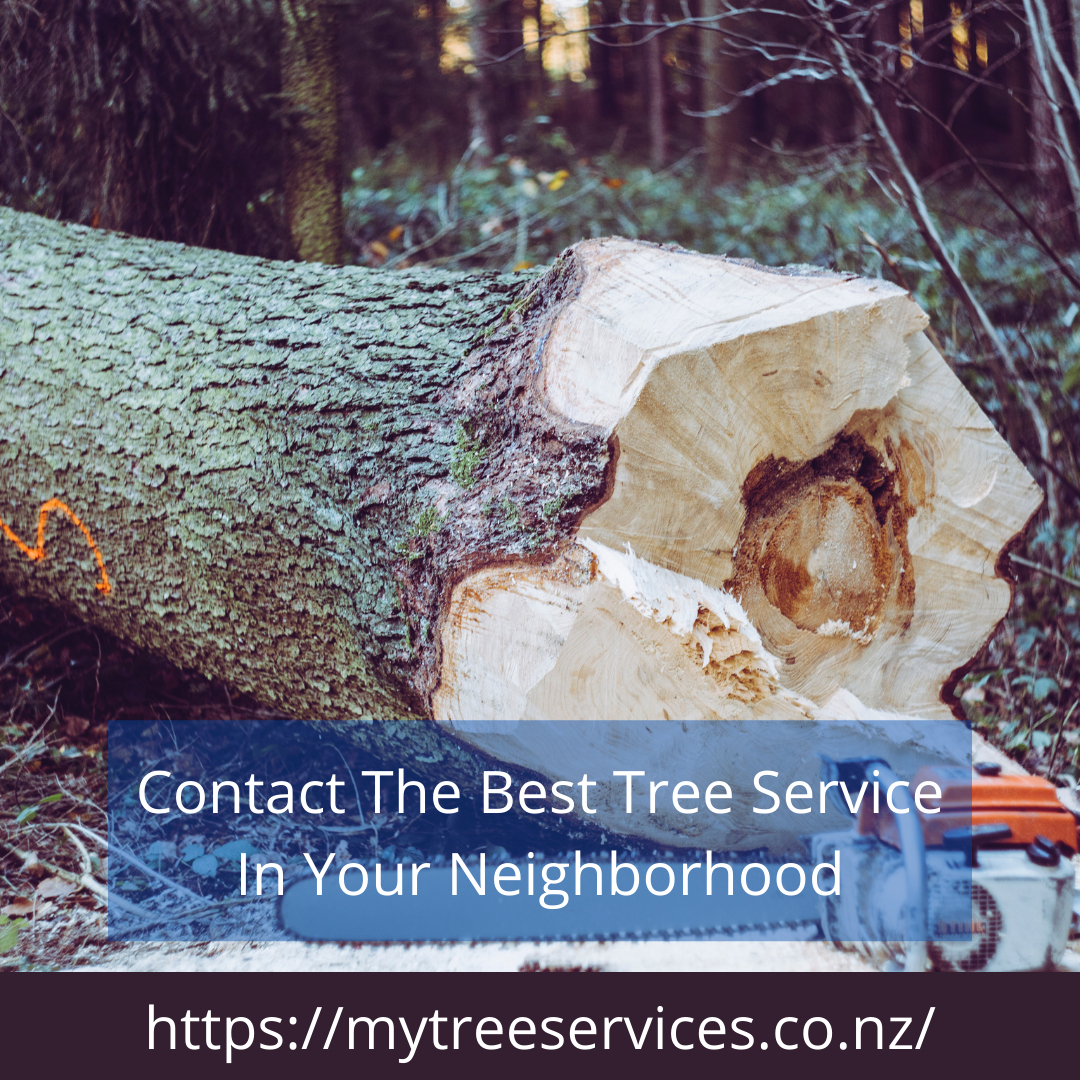 Efficient Tree cutting near me   My Tree Services