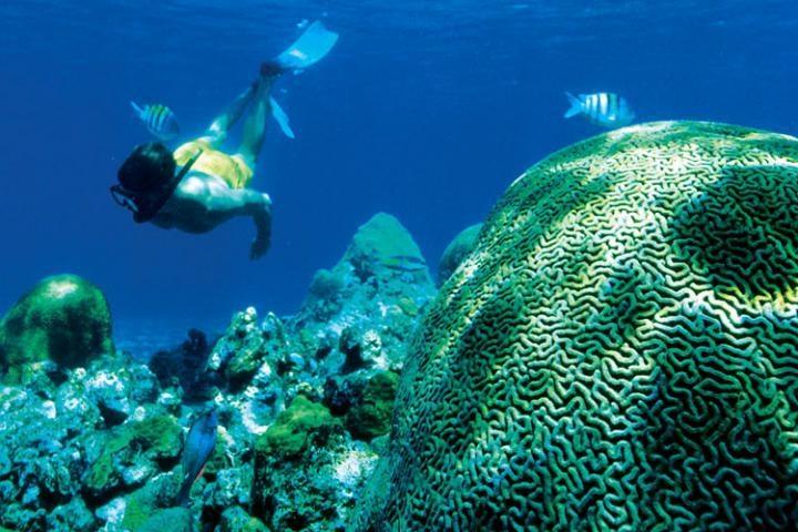 Corals..