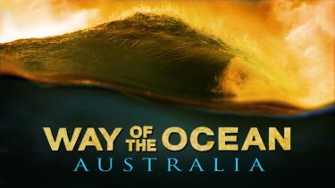 WAY OF THE OCEAN - Official Trailer 1